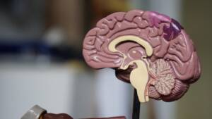 Brown brain decor in selective- focus